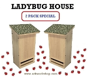 Ladybug House 2 PACK Surf Green Roof