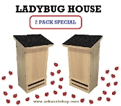 Ladybug House 2 PACK Black Roof
